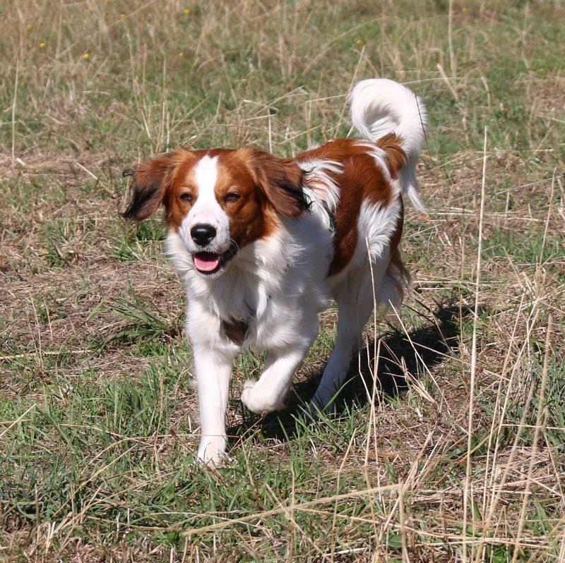 Suchhundefreunde Einhausen Ben